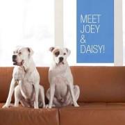 Joey - June, 2010