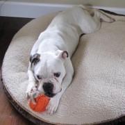 Daisy - March, 2010