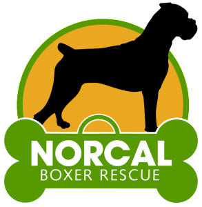 Home | NorCal Boxer Rescue