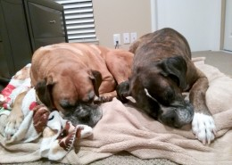 Kali (left) snuggling with her foster fur-brother
