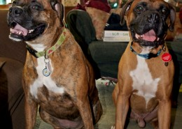 Jane (left) and Beau (right)