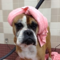 Coco at the spa