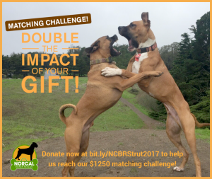 Strut Your Mutt 2017 Matching Donation Challenge