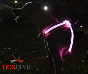Strut Your Mutt Drawing: Noxgear Lighthound