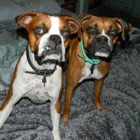 Sadie & Thor