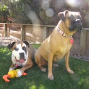 Peggy Sue & Frankie - September, 2013