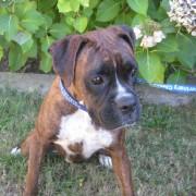 Lola - August, 2010