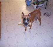 Cookie - December, 2010