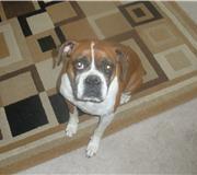 Zoey - October, 2010
