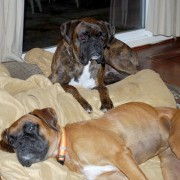 Molly & Brutis - January, 2011