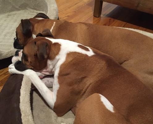 Daisy (bottom) and Duke (top)