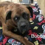 Bubba
