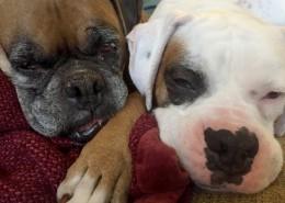 Cooper with new fur-brother Skoda