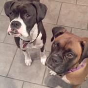 Eddie with his new fur-sister Eva