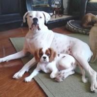 Jax with his fur-sister