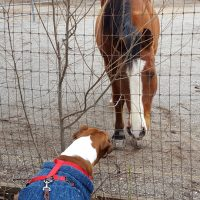 Conner loves visiting the horse around the corner